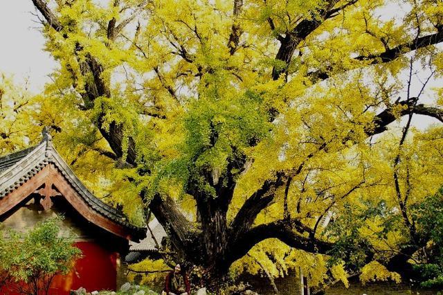 同城丨冬近秋去 太原晋祠景色愈发斑斓