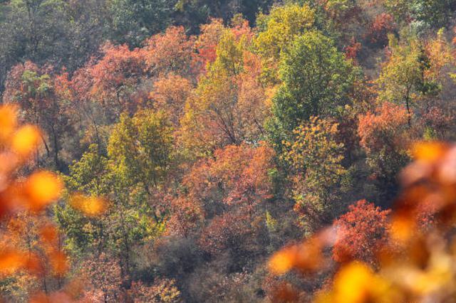 高清丨山西这里的红叶红了 约不约