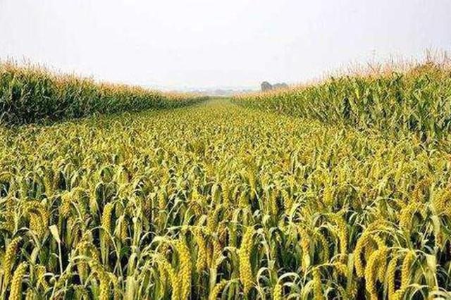 """有机旱作农业破解山西""""雨养农业""""之困"""