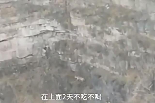 视频丨长治:小狗被困30米悬崖 主人绑绳下崖相救