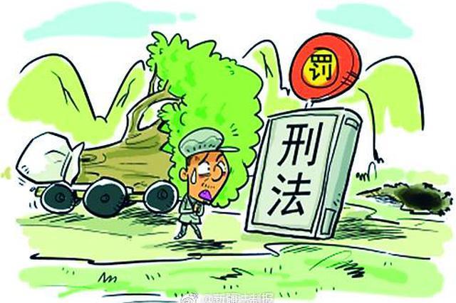 太原警方查获一起盗伐林木案 嫌犯迫于压力主动投案