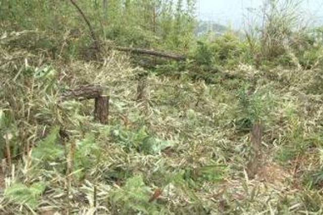 晋城一男子未办采伐许可证私自砍伐林木被判刑