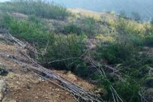 晋城:男子倾倒垃圾致使5.56亩林木损毁被刑拘