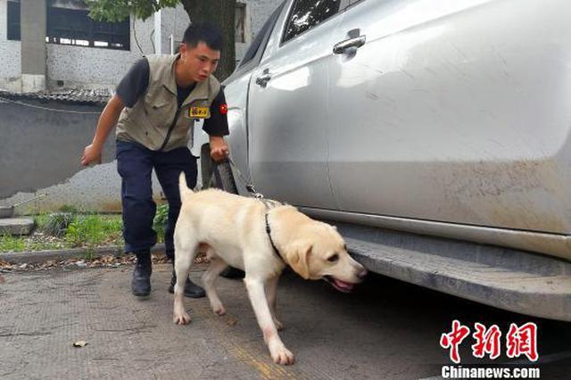 太原:养狗逾期未登记个人罚5000元狗没收
