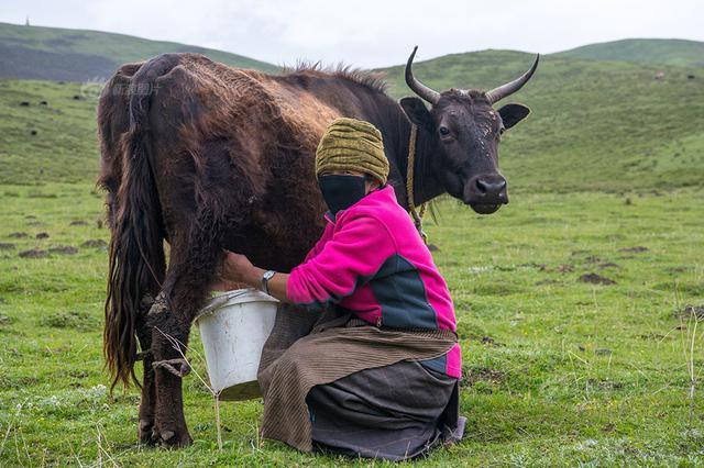 山西开展生鲜乳专项整治行动 严厉查处非法添加行为