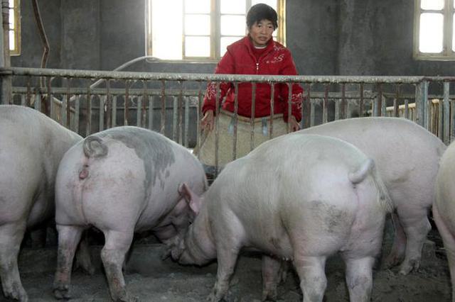 山西:稳定生猪产能 确保2020年出栏生猪800万头