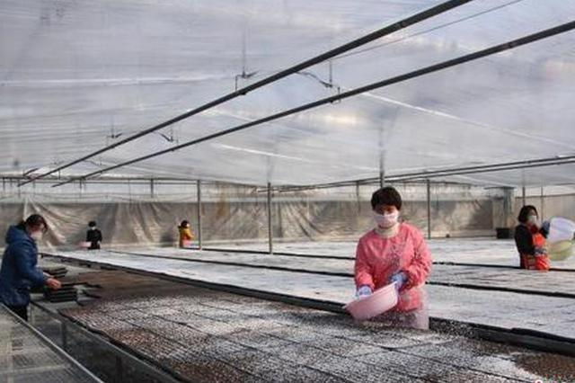 中国青椒之乡的初春:疫情难阻备耕忙