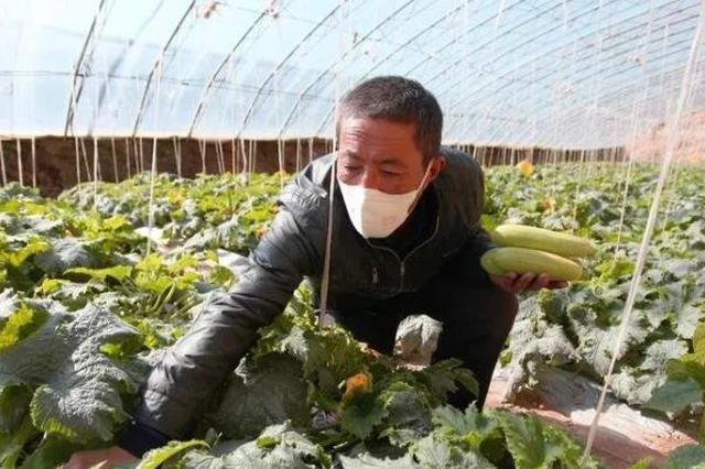 疫情下的蔬菜大镇:保障供应 日产蔬菜五万斤