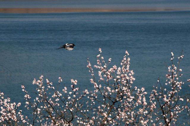 林州太行大峡谷:治愈身心的倦懒 迎接春天的希望