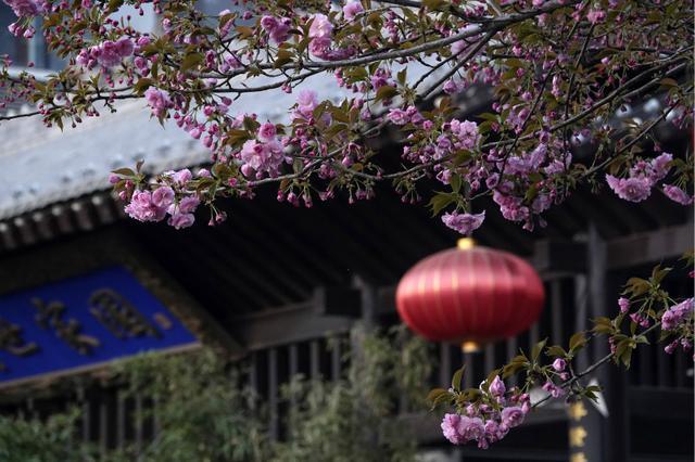 山西绛州:满城花香伴清明