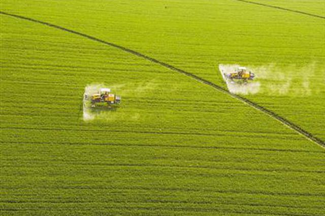 山西永济:小麦春管保丰收(图)
