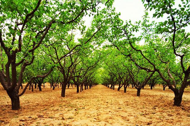 全国首家 山西经济林发展地方法规助农民增收