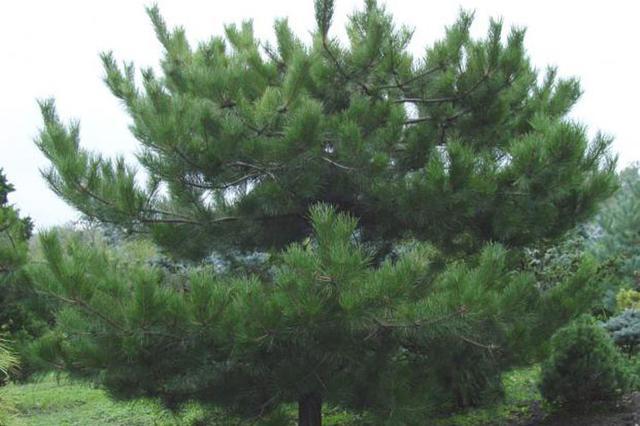 晋中警方破获特大盗窃风景树系列案件