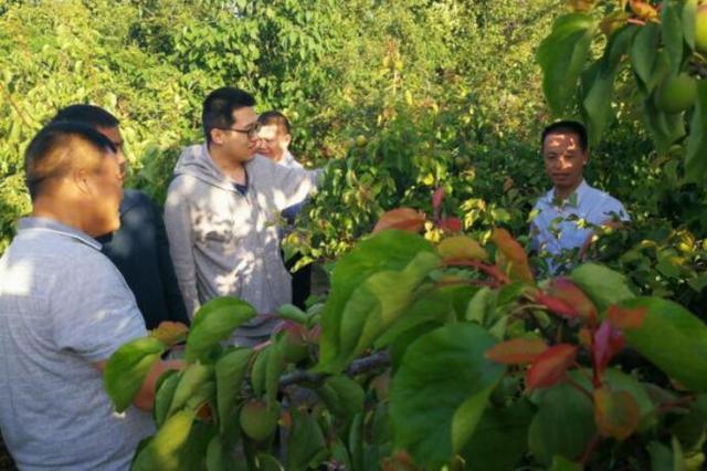 农艺师带回德国经验助力村民脱贫