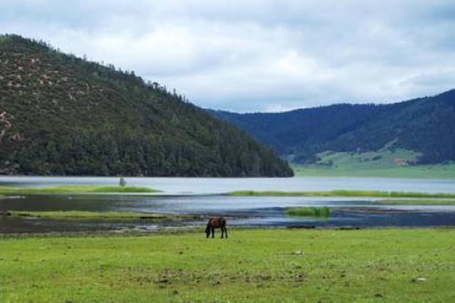 山西林草系统开展安全生产专项整治三年行动