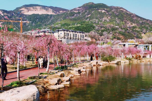 """""""锦绣太原?生态西山""""2021年樱花文化旅游节启动"""