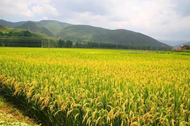 加快有机旱作农业发展 打造特色优质农业产业