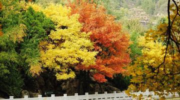 秋去冬近 晉祠景色愈發斑斕