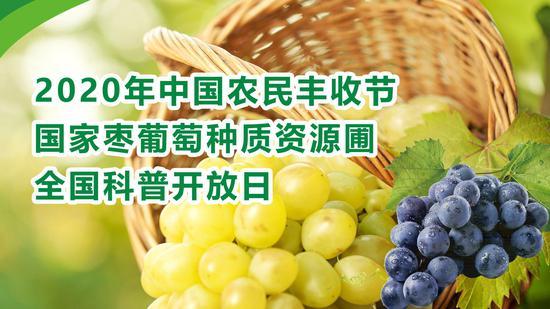 庆农民丰收节 国家枣葡萄种质资源圃科普开放日举行