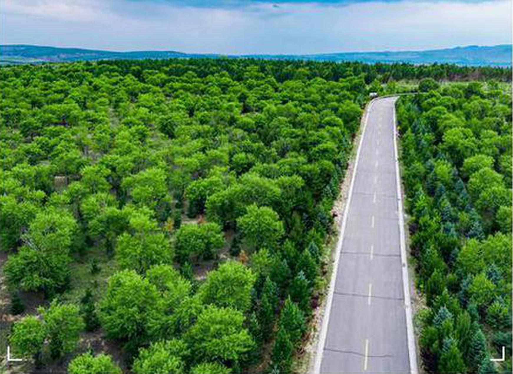 """山西交""""十三五""""绿色答卷:用林也造林 五年绿更浓"""