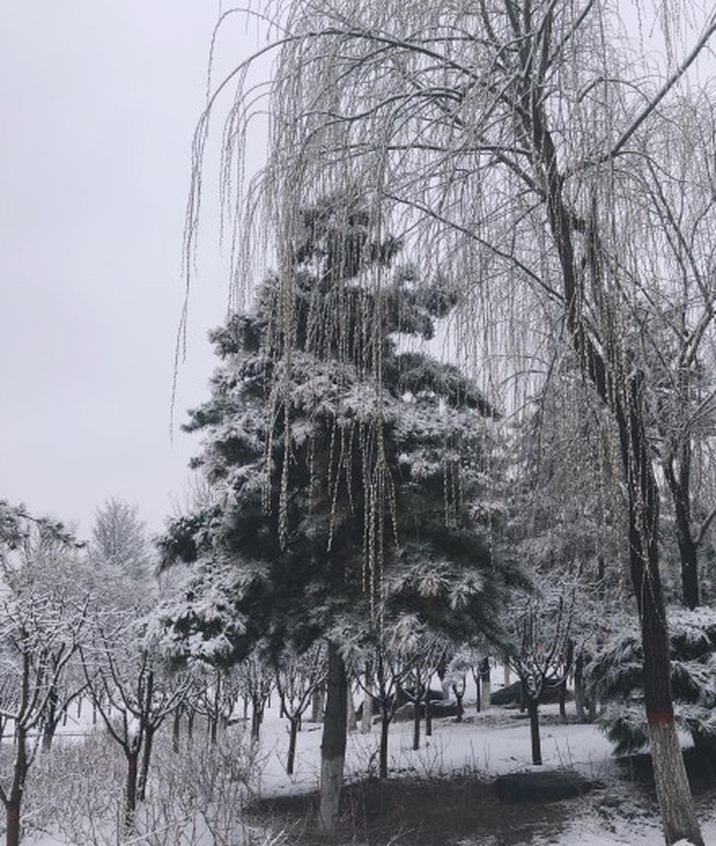 山西多地迎來春雪