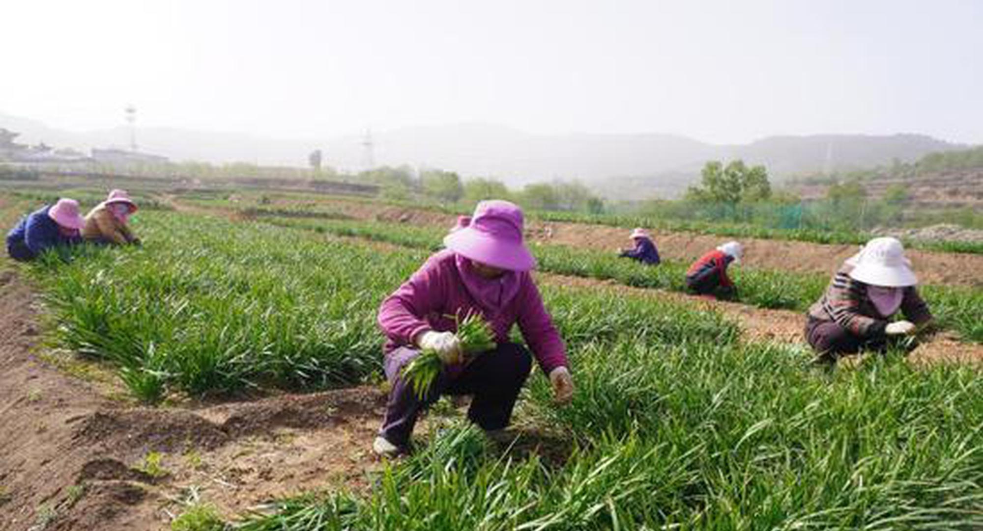 """山西""""老龄""""山村发展产业从传统种植找到出路"""