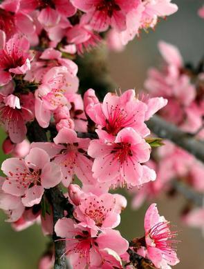 春季赏花攻略:山西赏花正当时