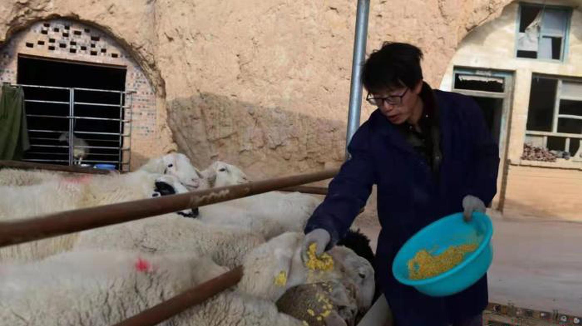 """呂梁青年不當高管當""""羊倌"""":為再造故鄉出把力"""