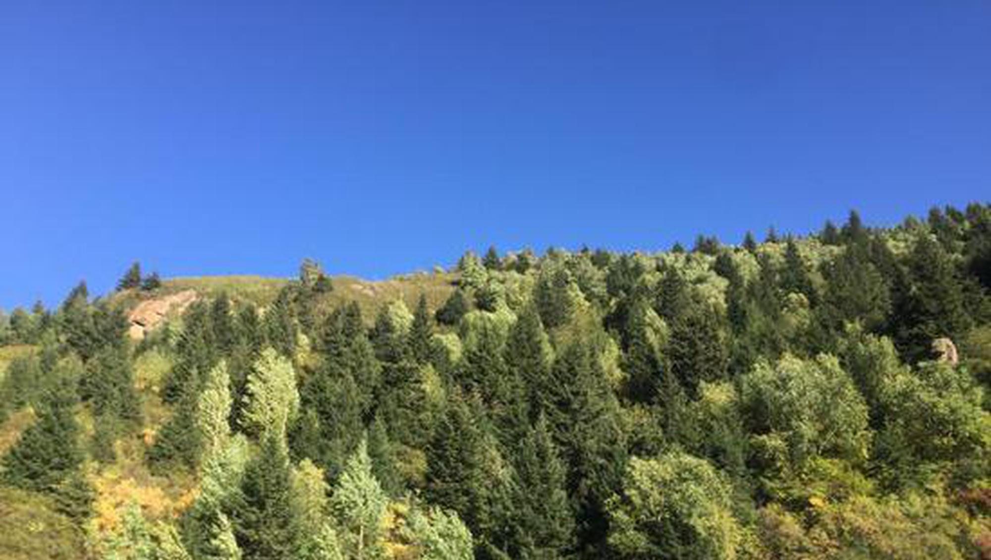 十四五山西确保营造林2000万亩