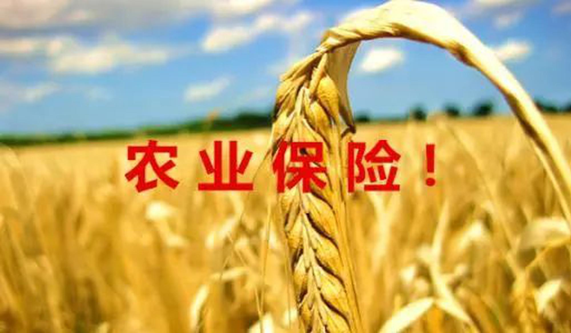 山西:推进农业保险托底 护航农民旱涝保收
