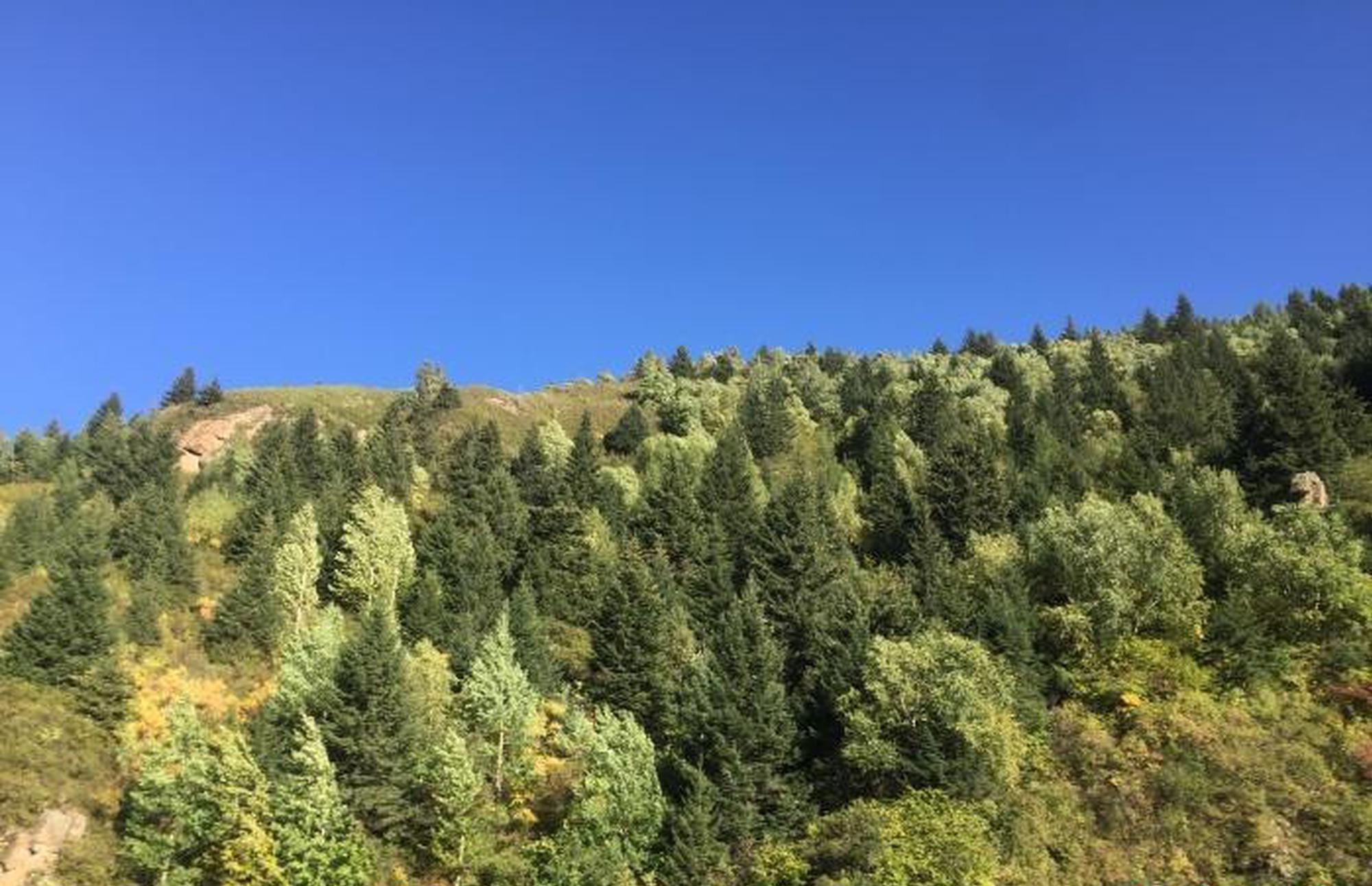 山西全面推行林长制 保护森林资源