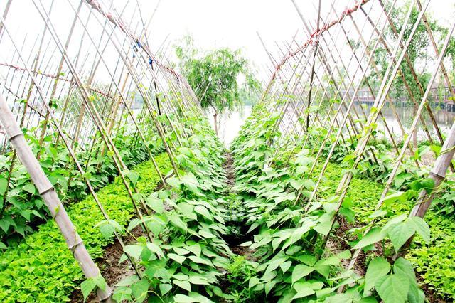 农业部评选山西9个合作社为全国农机合作社示范社