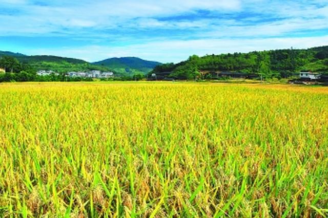 山西率先开展电动农机奖补 掀起农机行业绿色革命