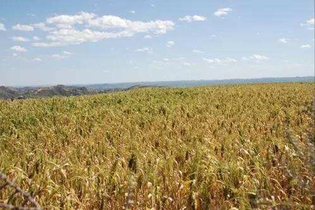 高平福代表:应加大小杂粮产业发展扶持力度