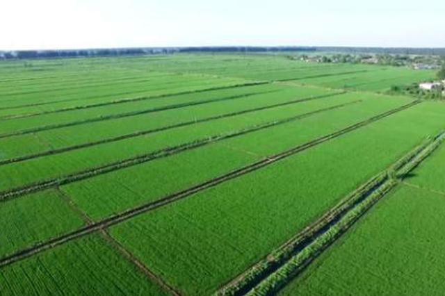 一花独秀不是春 山西农业六大产业集群齐发力