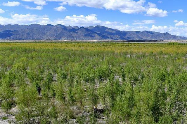 山西造林绿化健步前行 5年累计完成营造林2206万亩