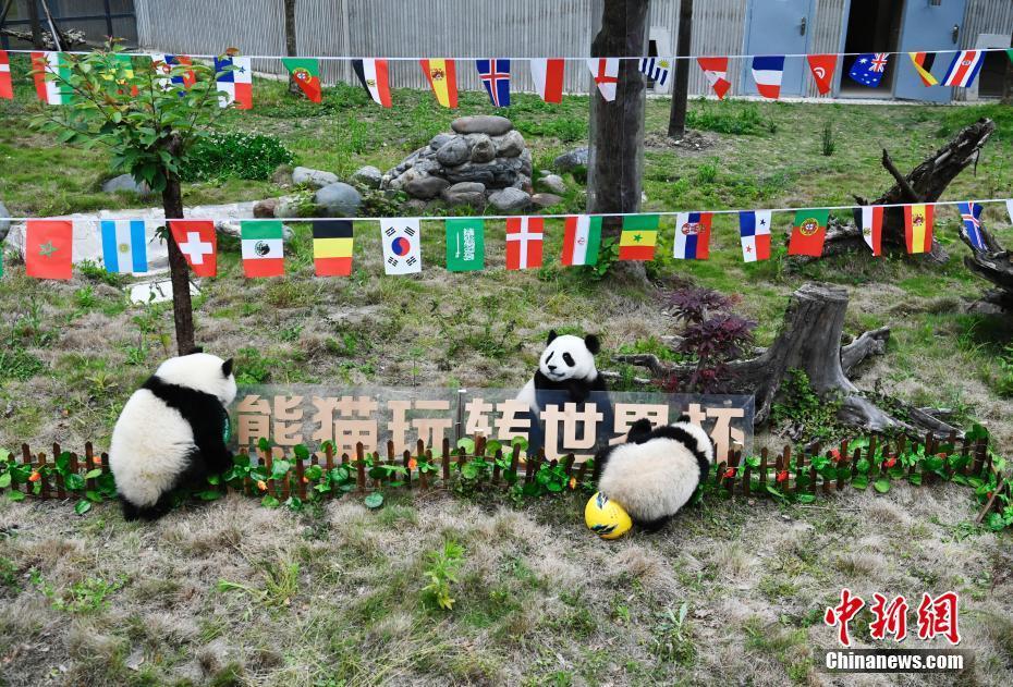 大熊猫助阵第21届世界杯足球赛