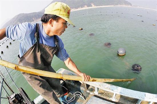 """大名鼎鼎的""""沙井蚝""""是深圳沙井福永西乡南山附近海域养殖的传统海产品之一。"""
