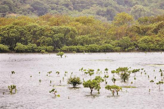 白鹭悠闲地迈着长腿在河道中觅食。