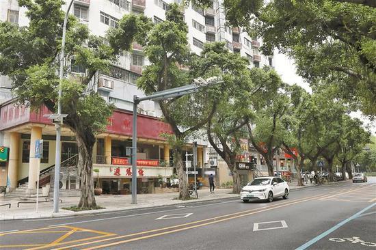 ▲修剪后的行道树长势良好。深圳晚报记者 张焱焱 摄