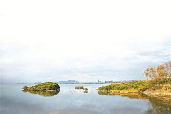 福田红树林自然保护区。刘兵 摄