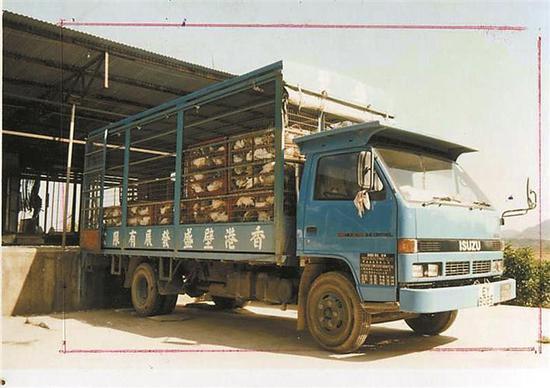 当年,光明大宝鸽场的肉鸽运往香港。