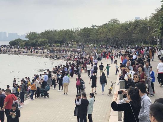 ▲深圳湾公园游人如织。