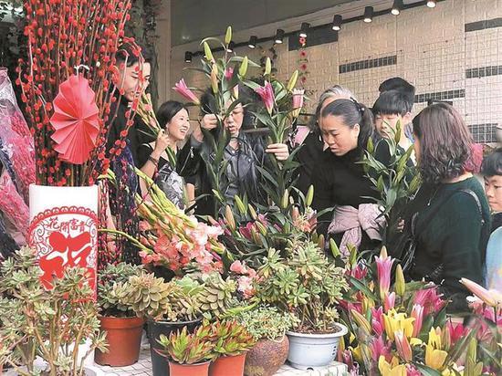 市民在百合花卉小镇花市选购年花。