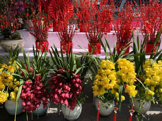 ▲记者在福田区某花店看到的小型组合年宵花盆。