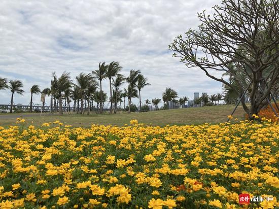 记者在前海海边公园转了一圈,如网友所说,景美人少,适合拍照打卡。