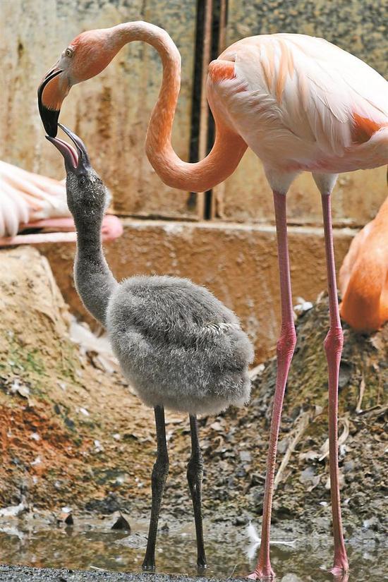 园里一道温情的风景线,活泼可爱的动物宝宝们开始了对未来生活的探索.