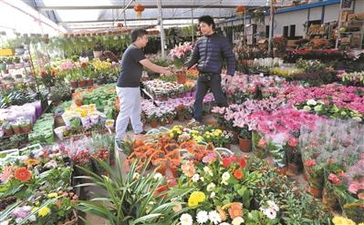 时隔三年,深圳迎春花市将在会展中心重开。