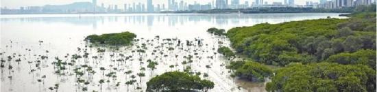 处于城市腹地的福田红树林自然保护区是深圳靓丽生态名片。《深圳自然大片今日首发!水准堪比BBC》视频截图
