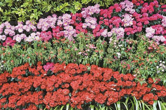 园博园新春花卉布置一隅。 陈玉 摄